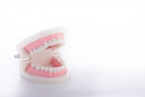 入れ歯について解説!費用・種類・役割・洗浄の仕方は?!