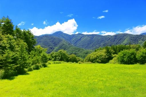 緑の大自然