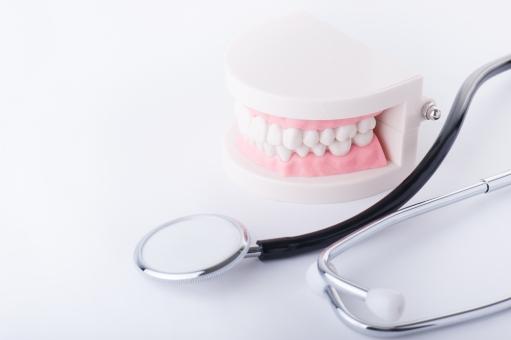 歯の模型とお医者さんグッズ