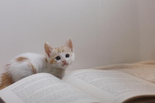 ネコお勉強