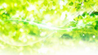 緑がきらりん
