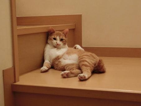 階段でひと休みする猫