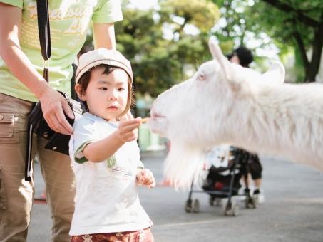 子どもと山羊