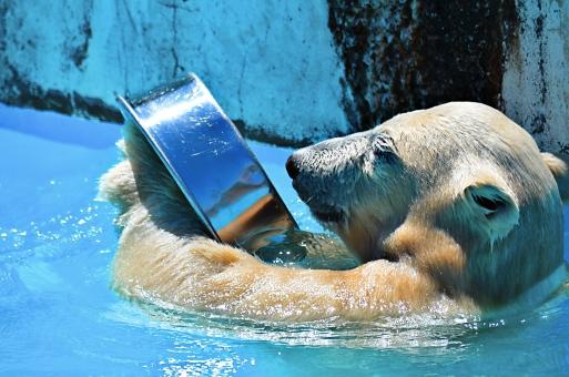 エサ入れで遊ぶ熊